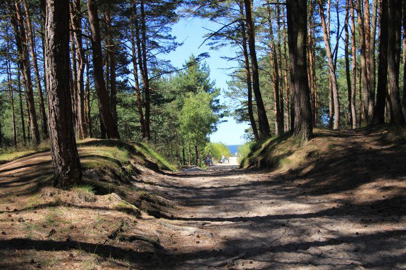 Droga na plaże przez las